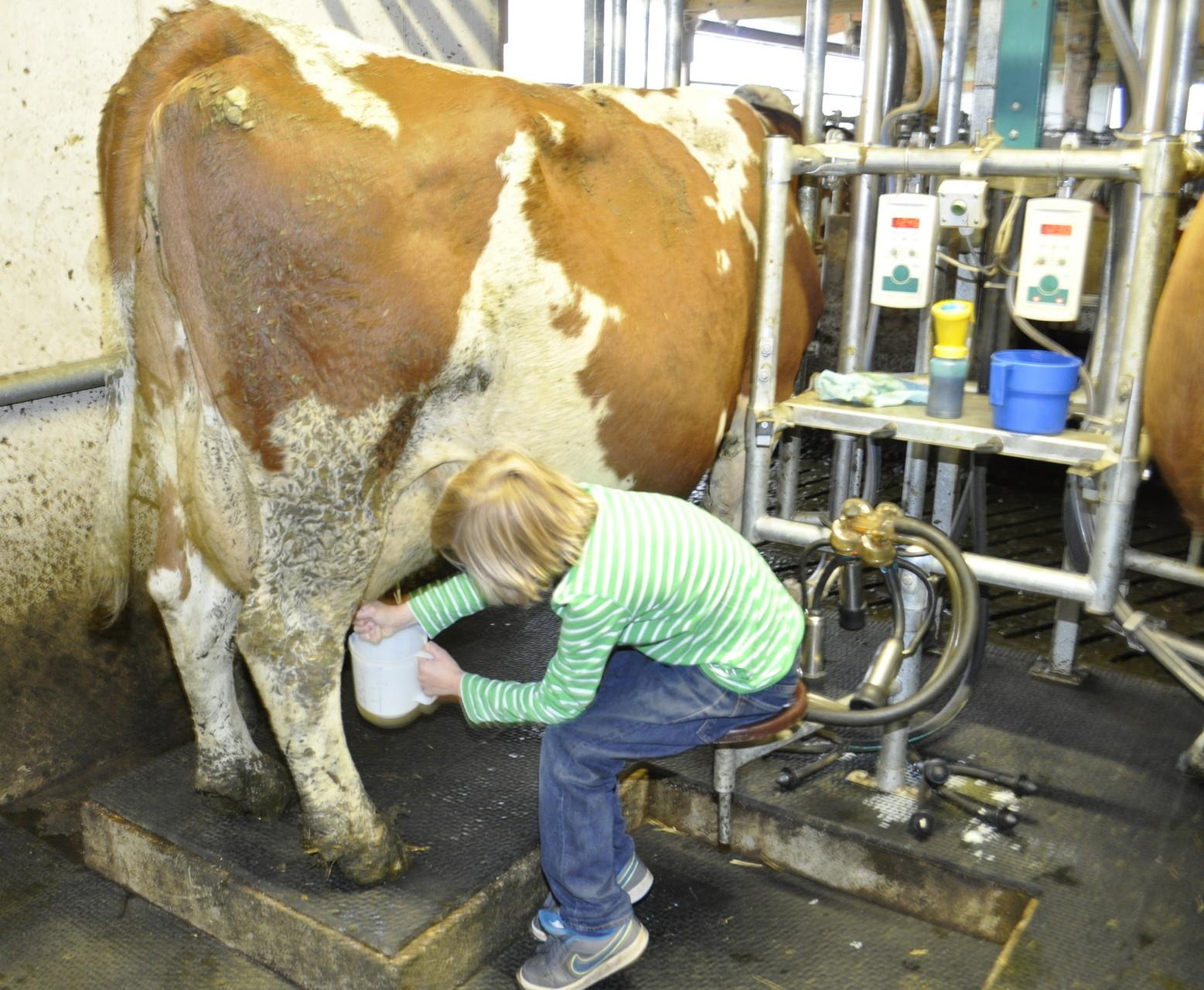 einmal schauen wo die Milch herkommt