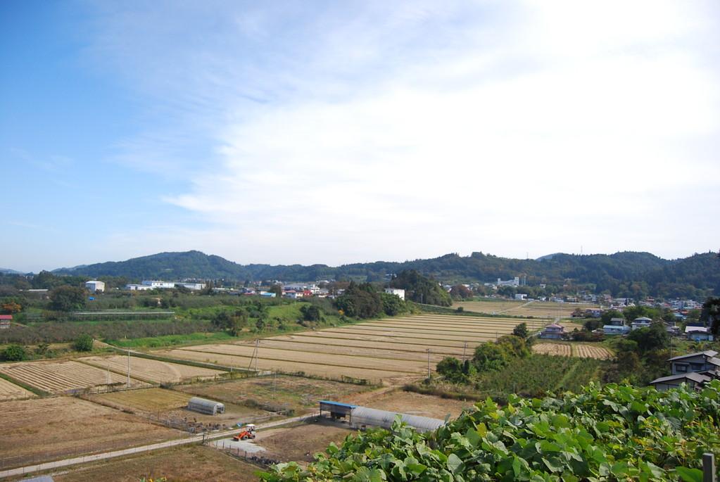 豊龍の丘からの眺望