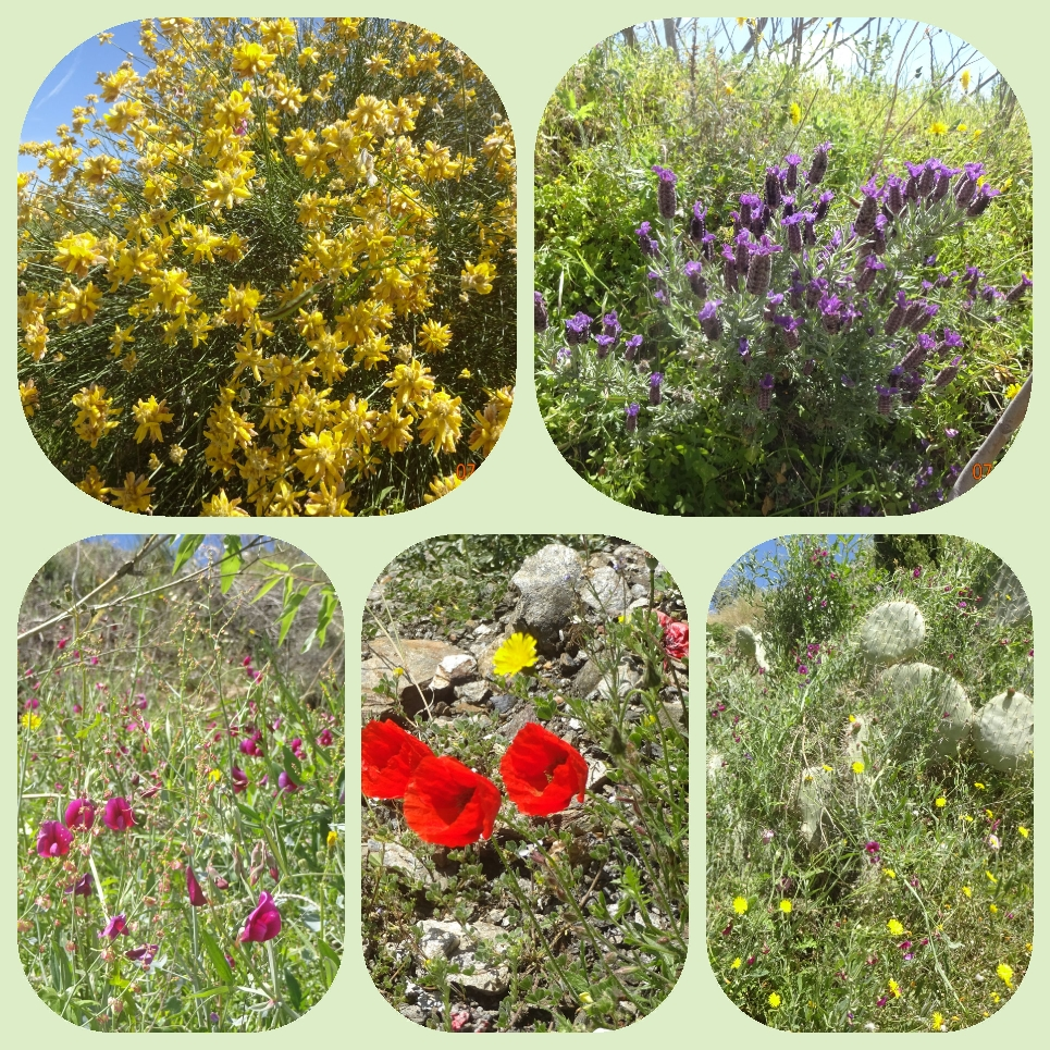 Und wie immer konnte ich mich nicht zurückhalten mit dem Fotografieren, überall diese Naturblumen, die trotz des rauhen und trockenen Klimas so schön blühen.