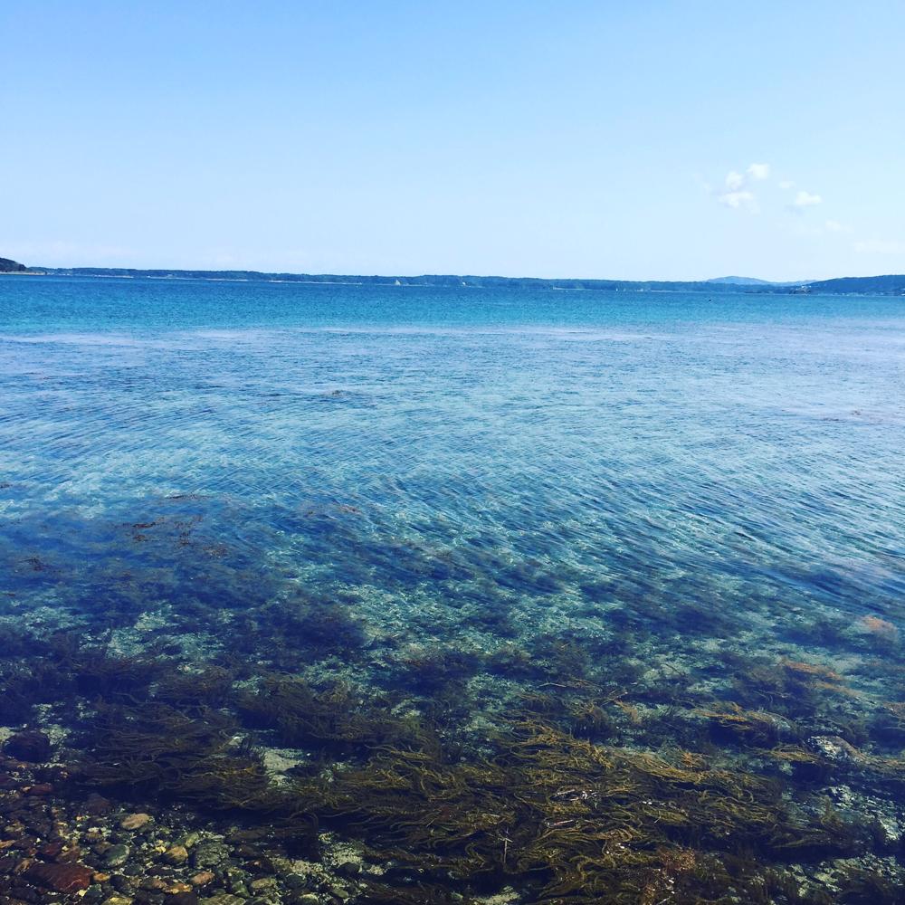 この内浦湾を見ながらポロロ〜ン♪イルカもいるよ!