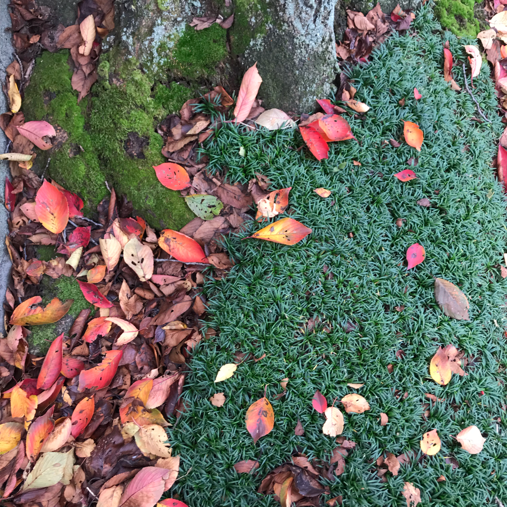 散歩しながらカラフルな秋を見つけました。