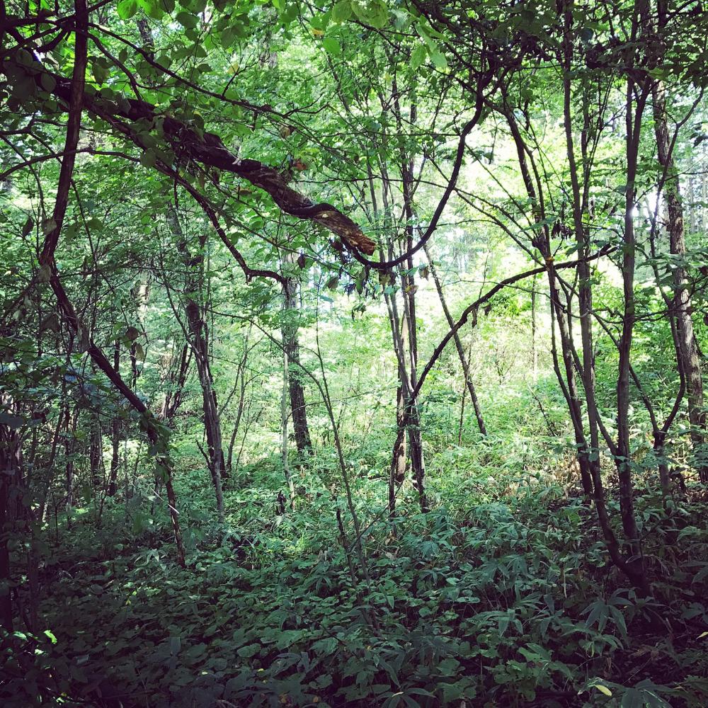 ドームパラダイスの周りの林。小川も流れてます。