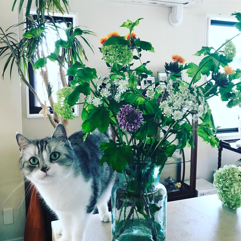 玄関に飾ったお花♪