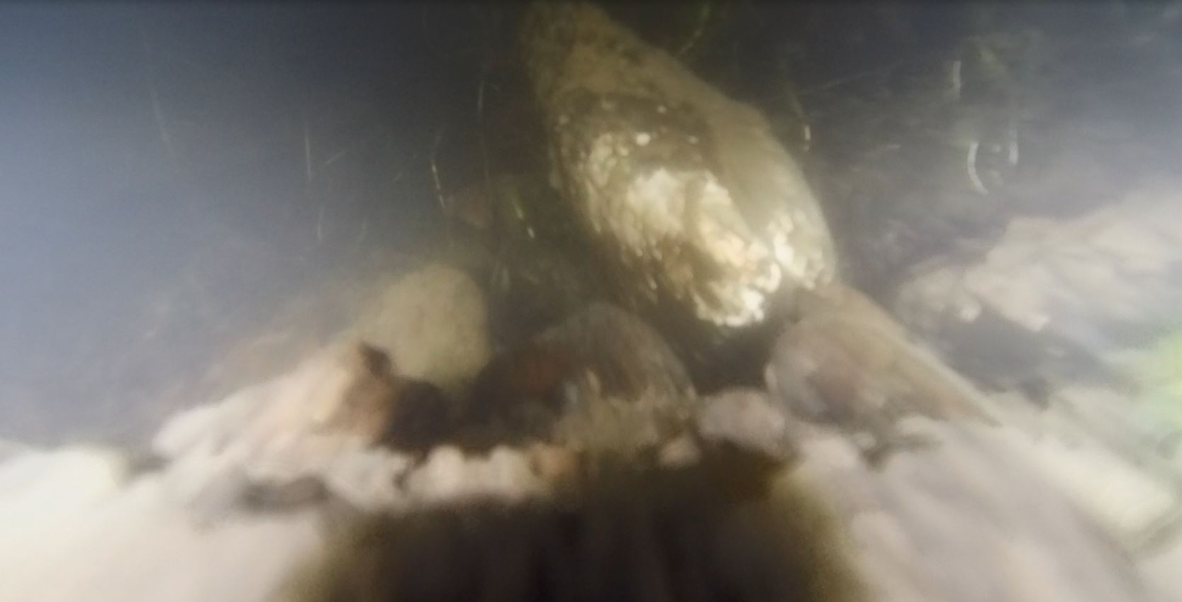 Wer findet sie? Teichmuscheln sind ein fester Bestandteil unseres Gewässers.