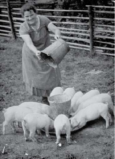 Hulda Schreiber beim Schweine füttern 1930