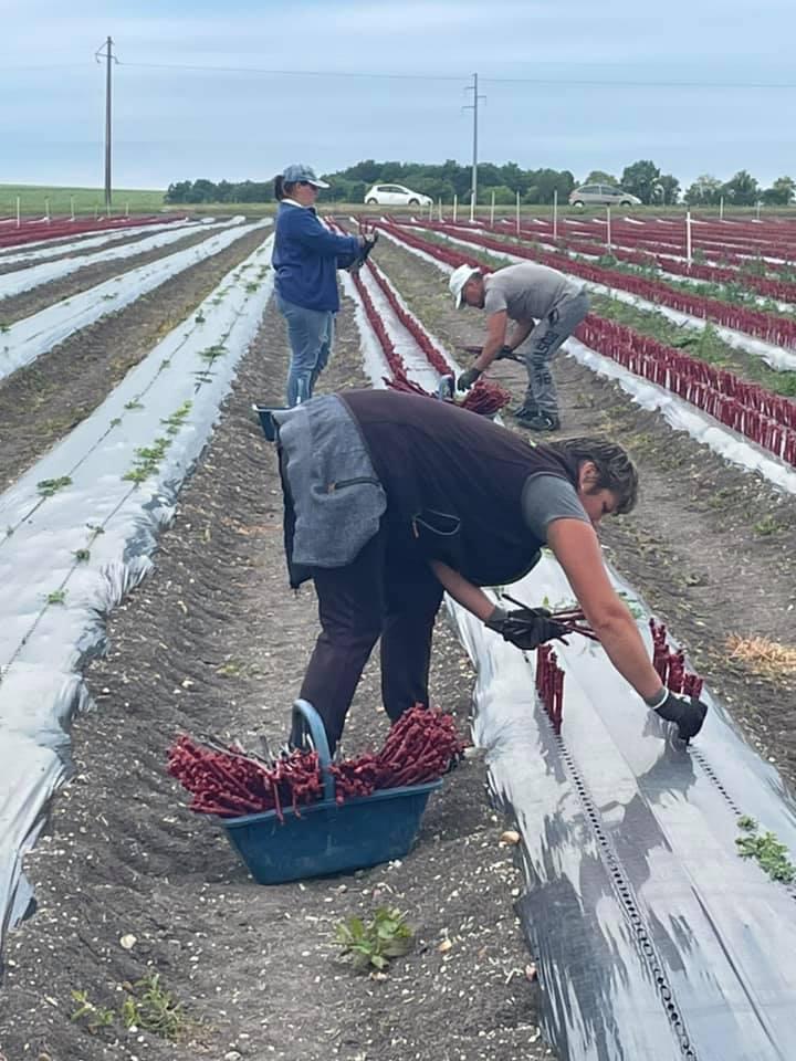 Notre équipe en pleine plantation