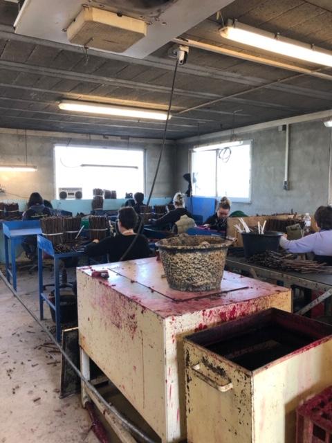 Atelier de greffage