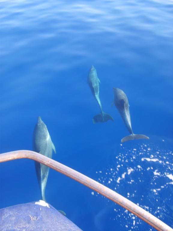 delfini a Portopalo