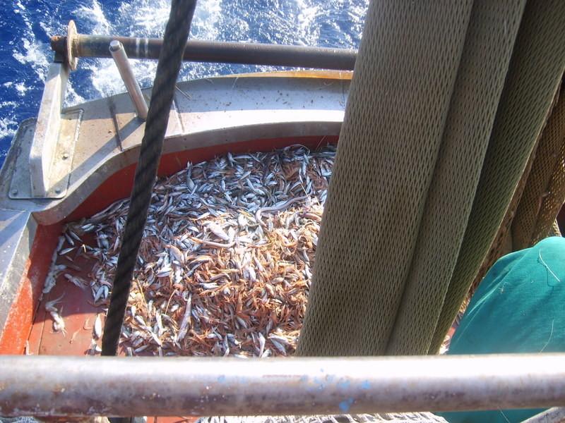 la pesca a strascico