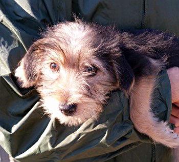 Tullio sardinienhunde e v for Argo fabiola