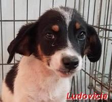 Ludovicia - geb. 07/2019