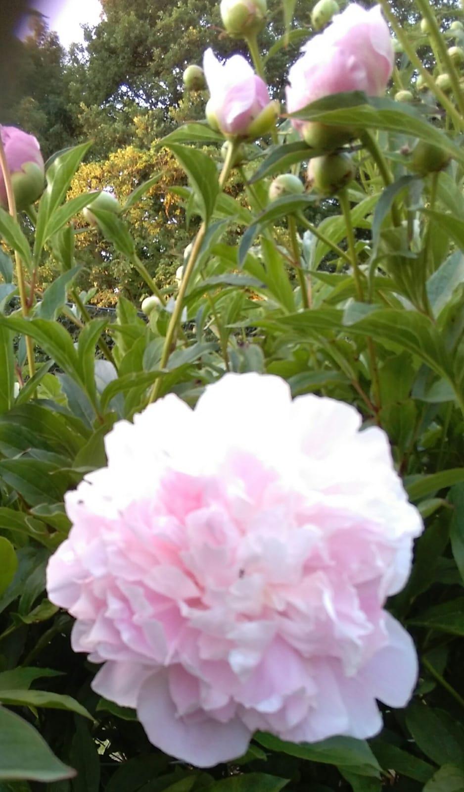 weitere Aufnahmen aus anderen Gärten