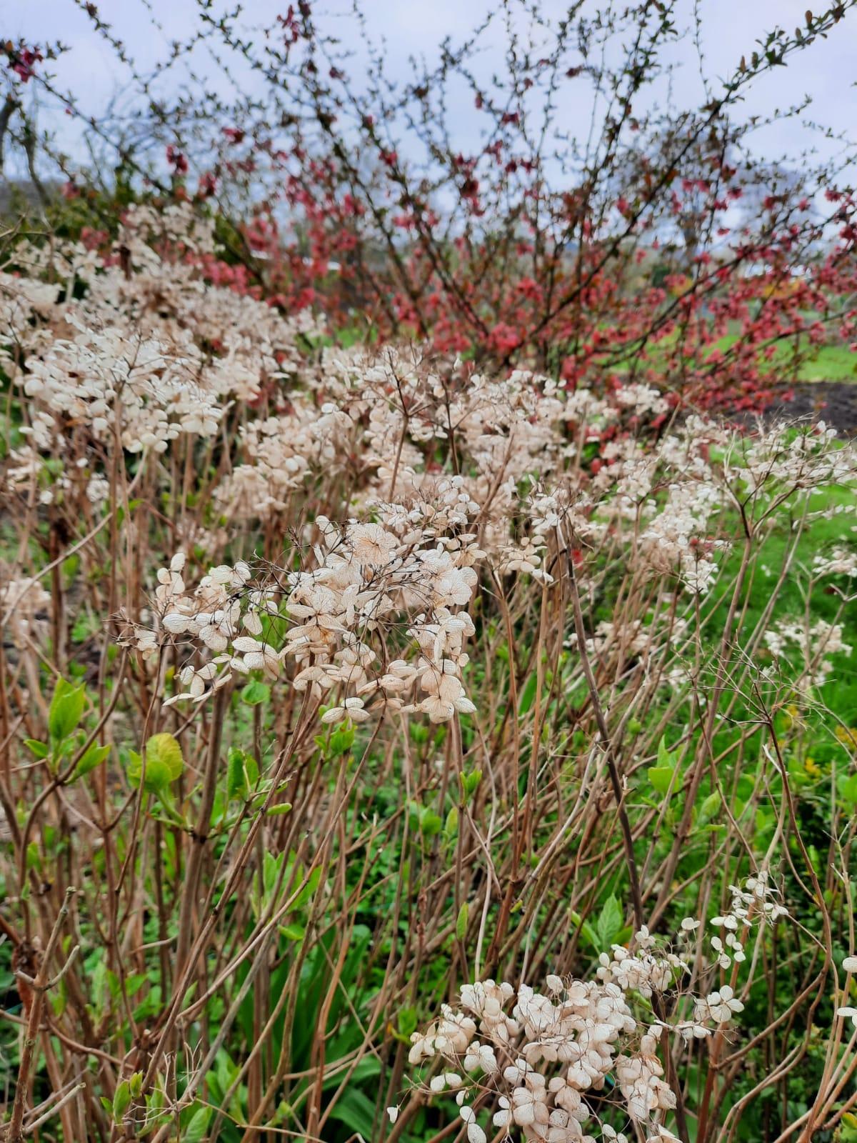 Blütenpracht von Eckhard fotografiert
