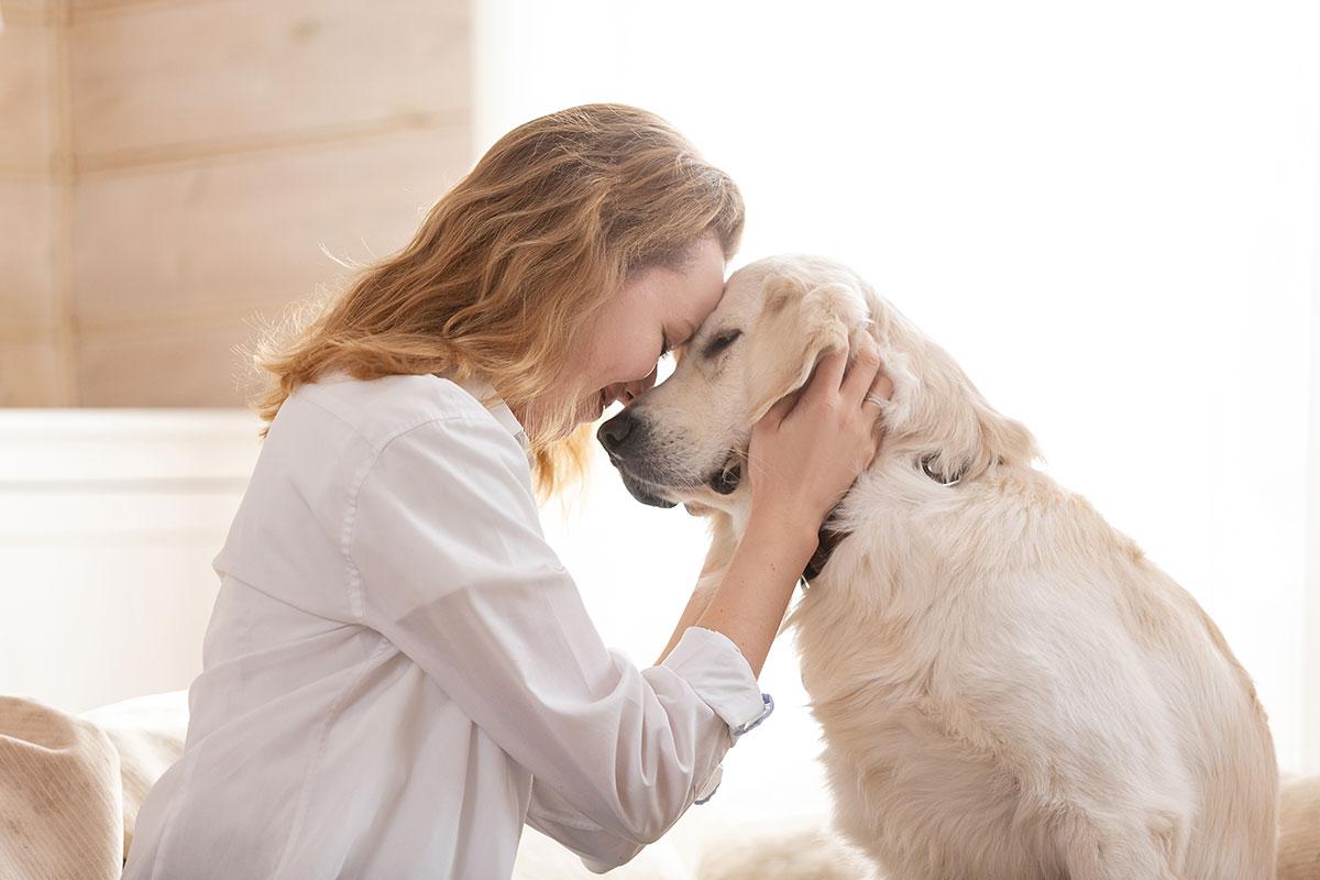 Geschulte Therapiehunde unterstützen beim Lernen