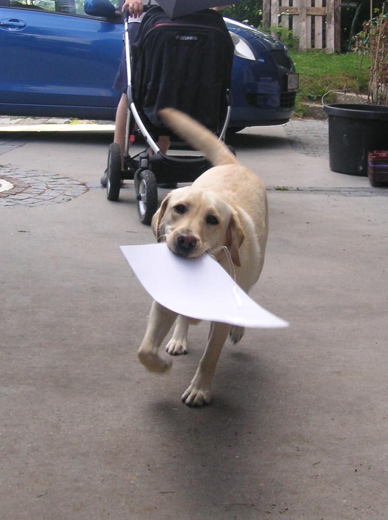 Papier apportieren