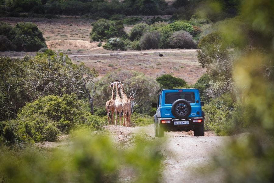 Auf Safari in Südafrika - Selbstfahrer-Safari in Südafrika