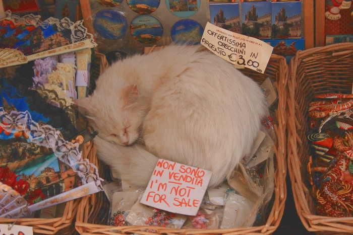 schlafende Katze in Tropea