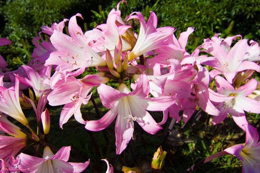 Reiseziele 2018: Die Azoren - Blumenparadies