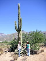 アリゾナの巨大サボテン