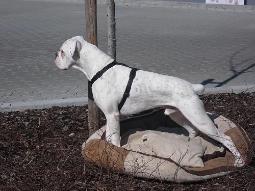 Unser Maskottchen Bianco, der den ganzen Tag die ankommenden Hundis begrüßt hat.