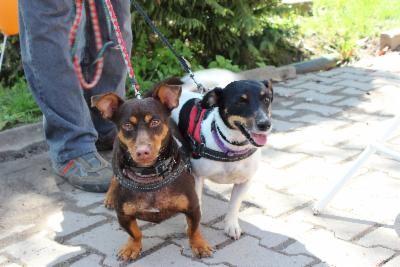unser Tim, das kleine Dackelbeinchen mit seiner Freundin Lilli
