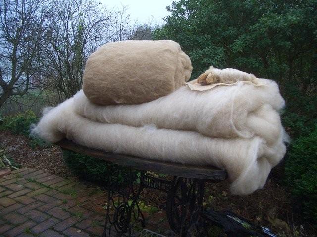 Kardierte Wolle vom 4 Monate alten Lamm , noch fuchsiger, filzt perfekt. Darunter kardierte Jährlingswolle.