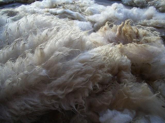 Die Rohwolle muß auf dem Hof in Sonne und Wind nachtrocknen