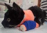 治療後のネコ