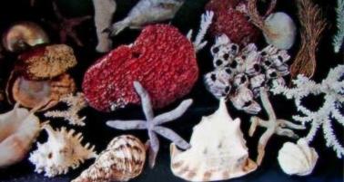 タツノオトシゴや珊瑚や色とりどりの魚達・・・