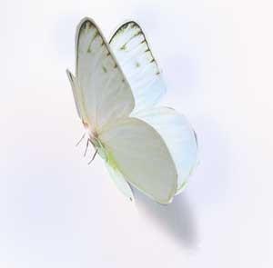 夢見心地な蝶たちの羽ばたき・・・