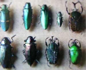 魔法の様な色をしたトンボや蝶ちょや虫達が・・・