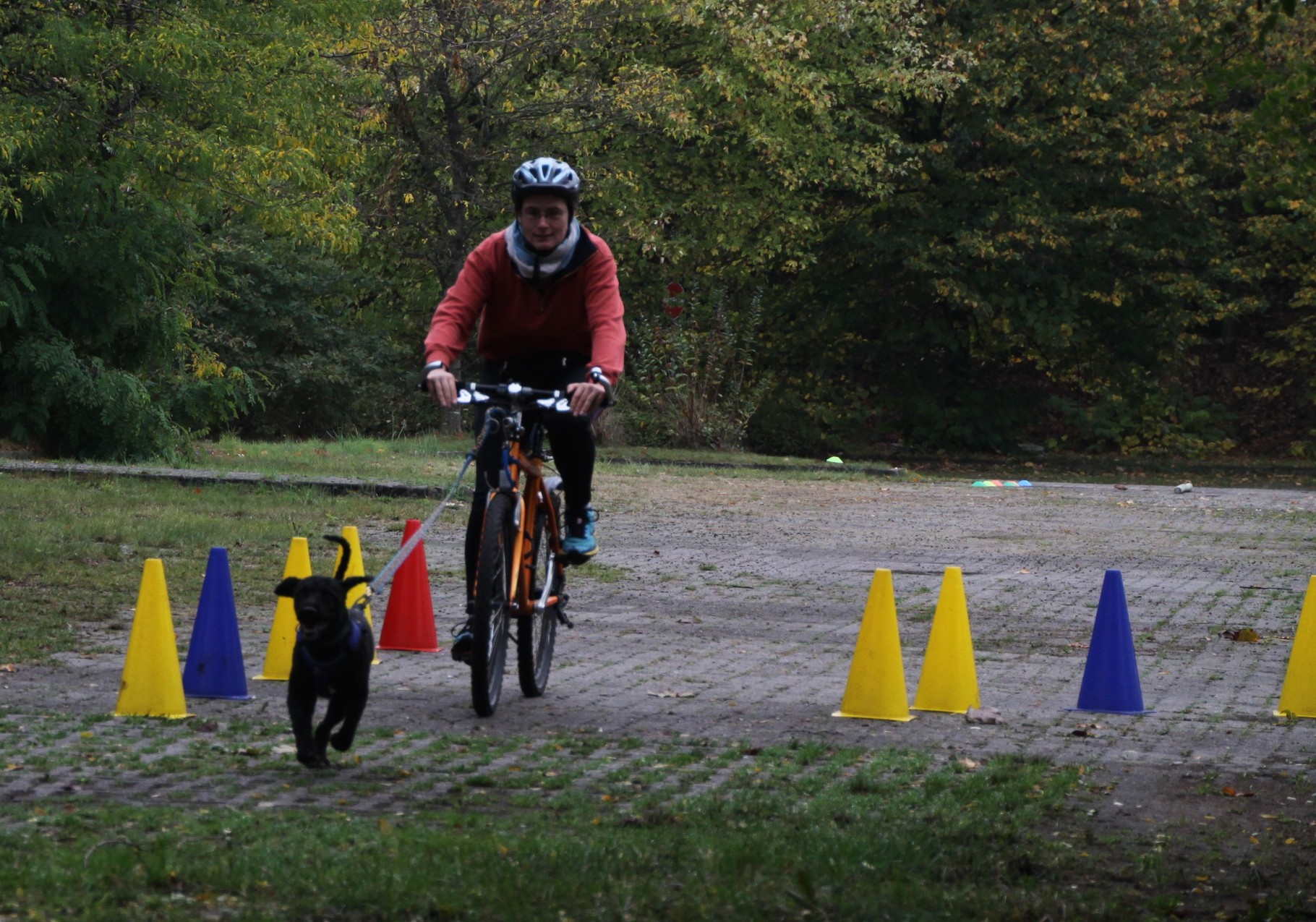 Rennvorbereitungen - zwischen Hindernissen durch