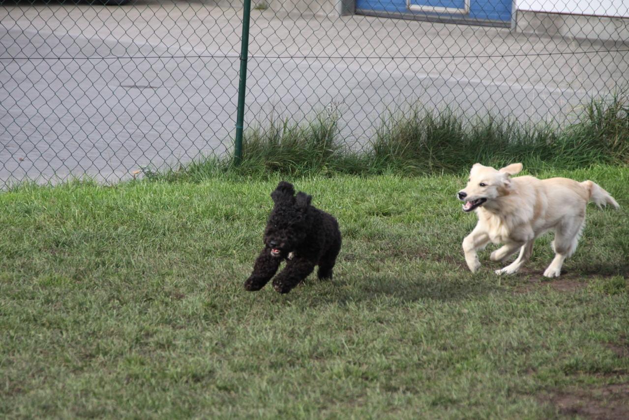 Wer wohl schneller ist...?