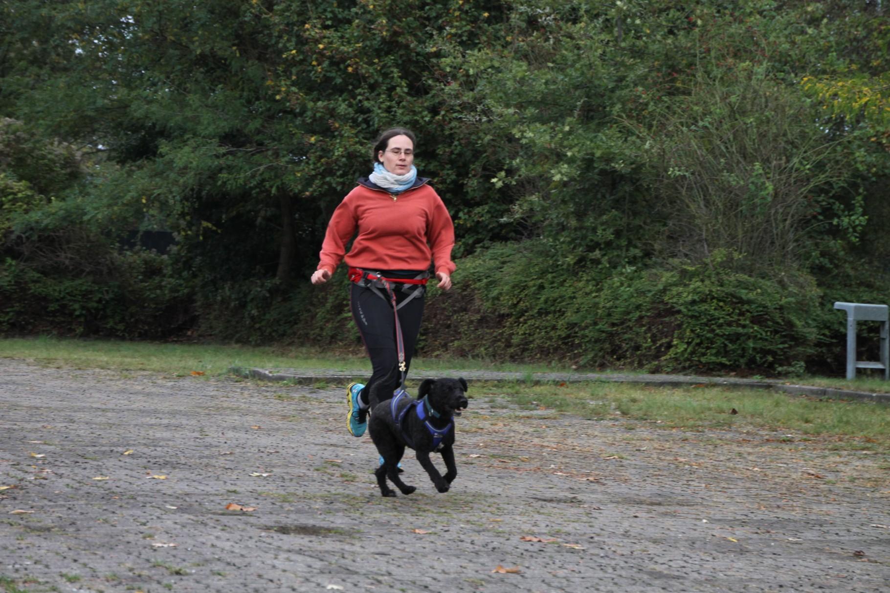 Rennvorbereitung - Kommandotraining zu Fuß