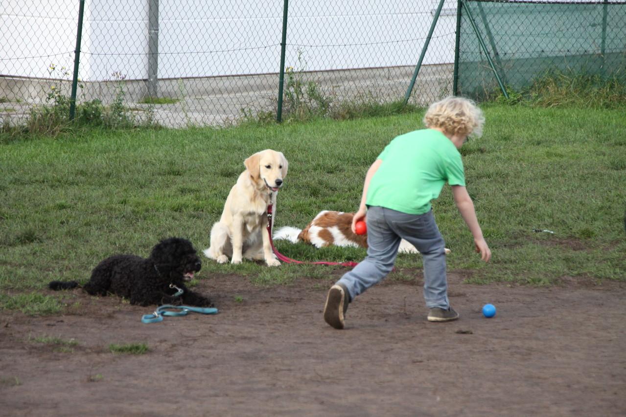 """""""Platz"""" mit Ablenkung - ballspielende Kinder. Wow - es klappt!"""