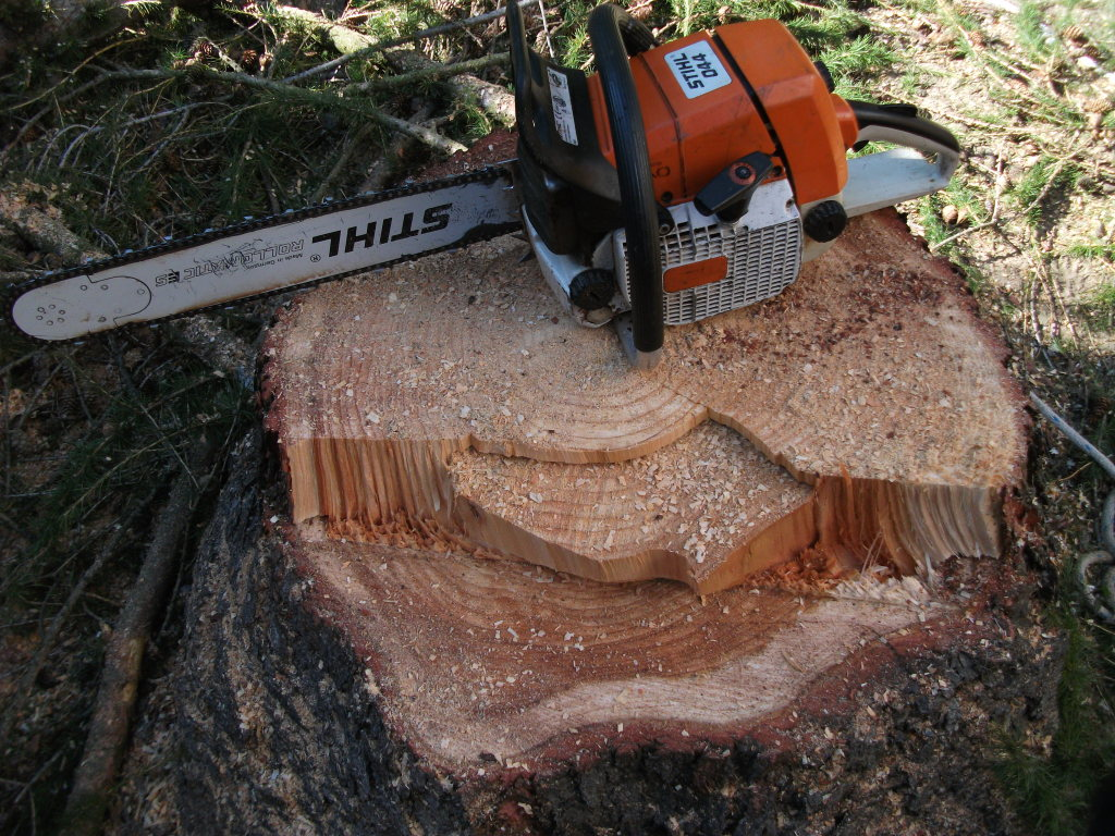 Baumpflege mit moderner Seilklettertechnik, Problembaumfällungen und Arbeiten mit der Hebebühne in Berlin, Brandenburg und Umgebung.