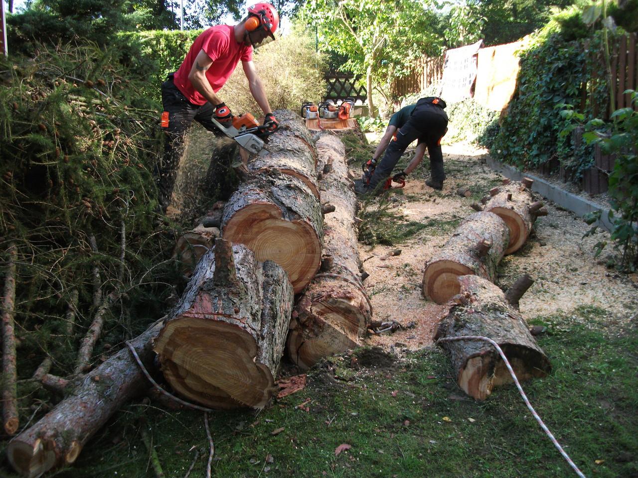 Einschneiden des gefällten Baumes