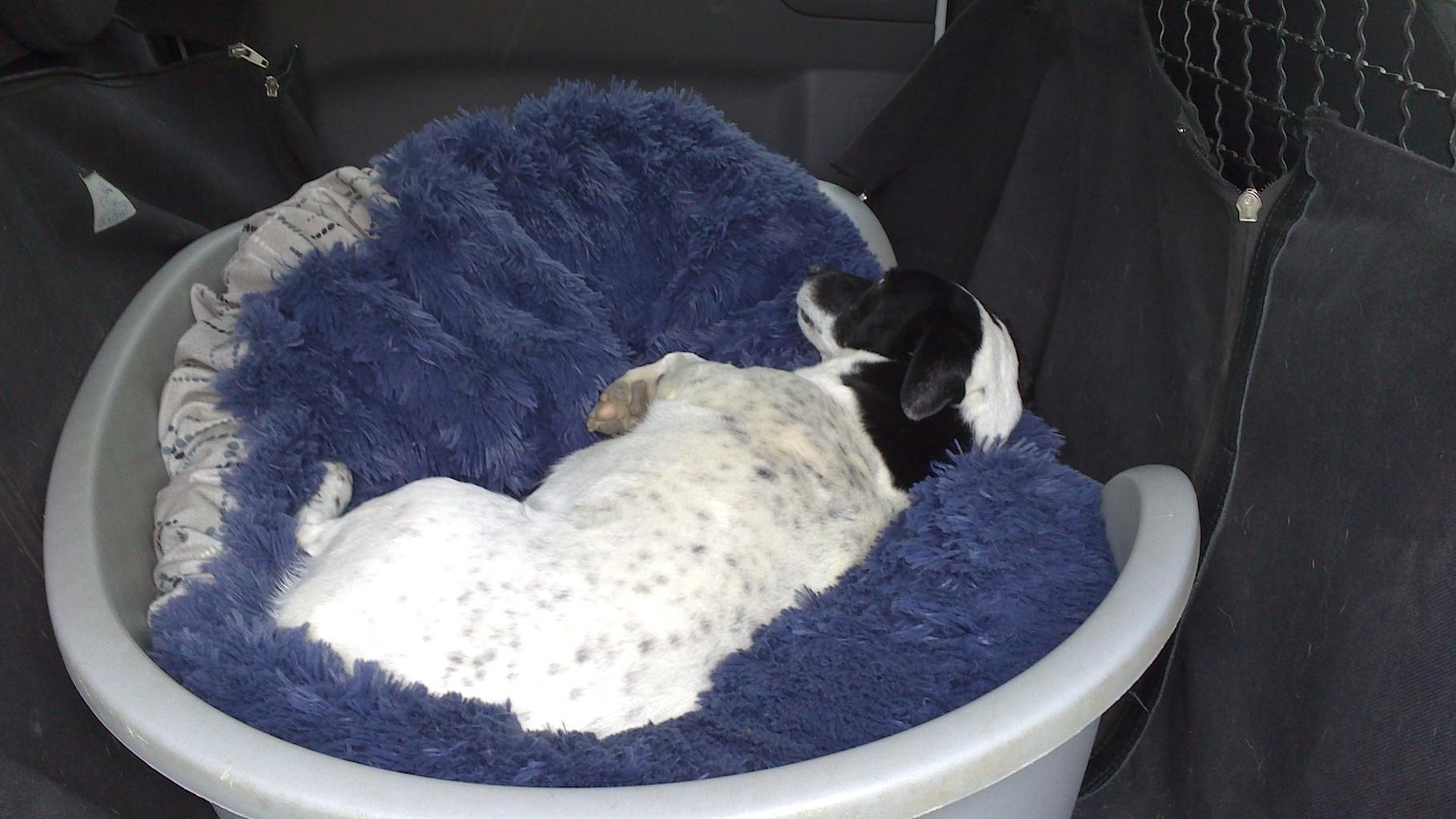 Mein Hund Tex genießt ein Schläfchen im Hundebett.