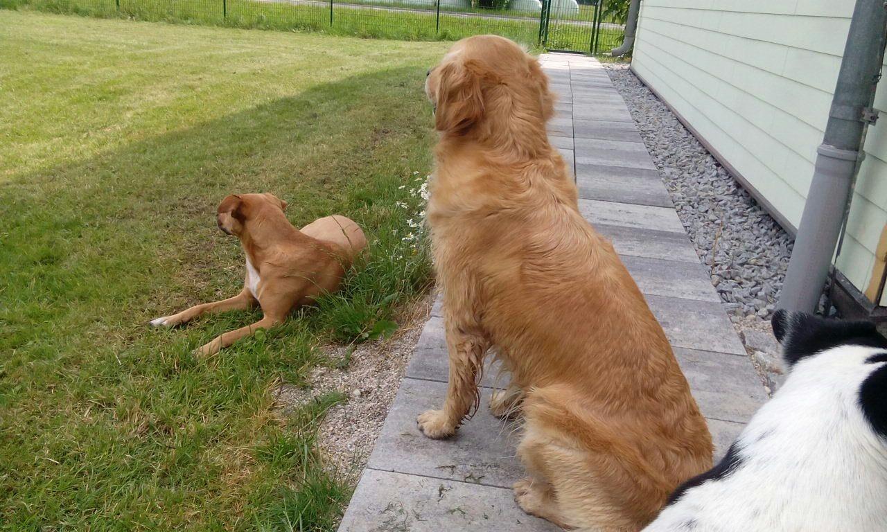 Die Hunde warten aufs Frauchen.