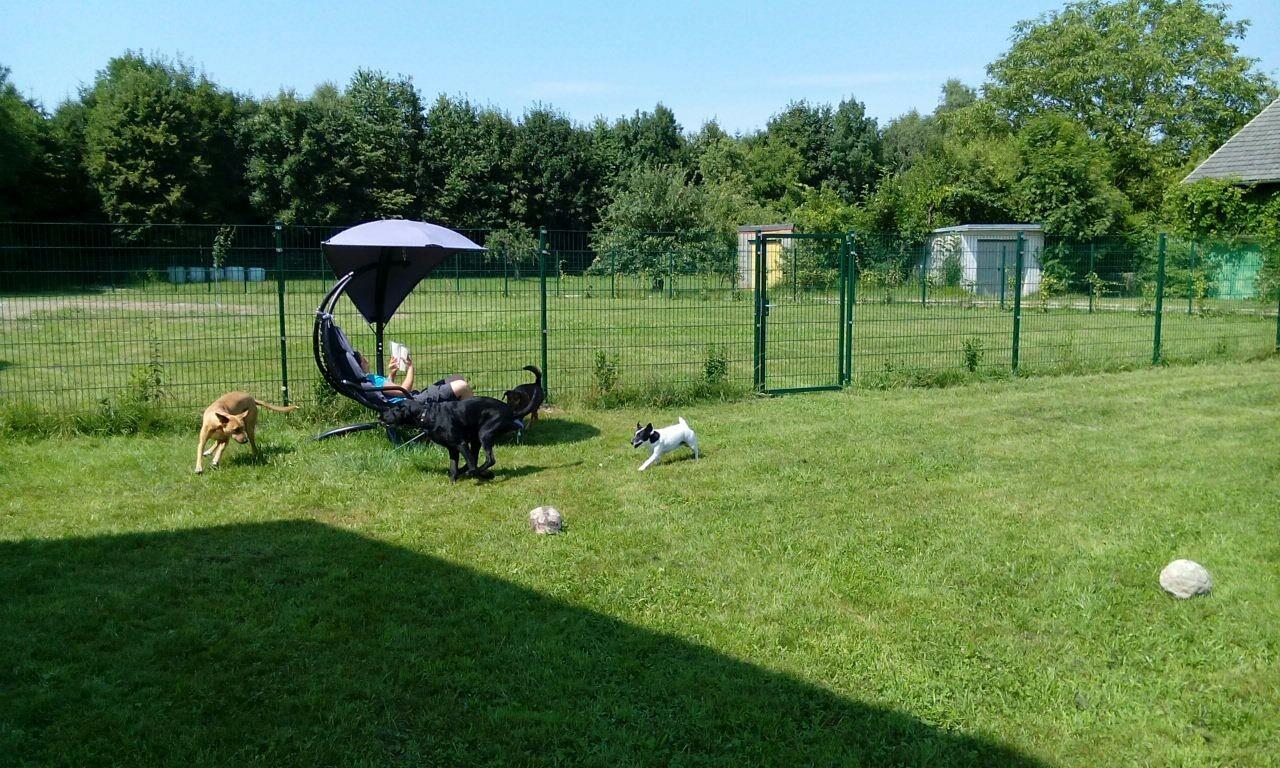 Nach dem Baden wird ausgiebig gespielt im Gästegarten. Alles ohne Leine, da das Gelände umzäunt ist.