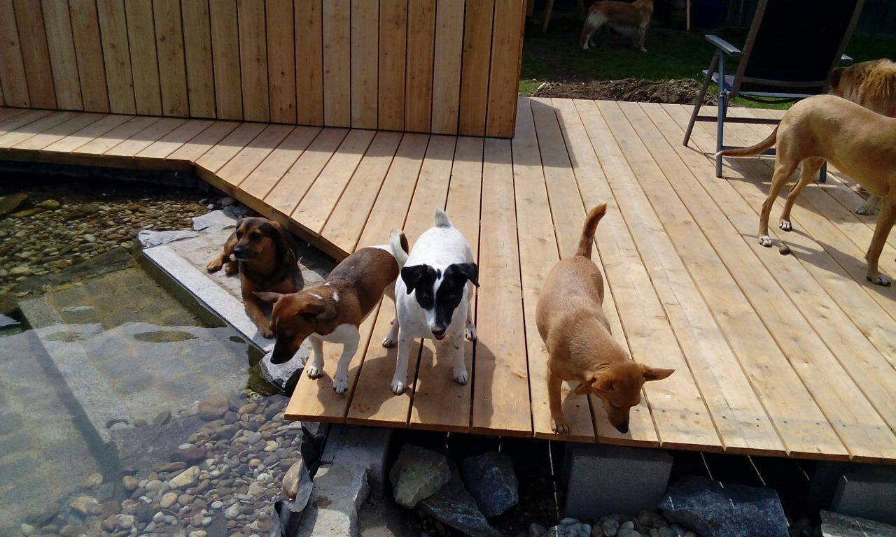Auch meine Hunde genießen die Ruhe beim Wasser.