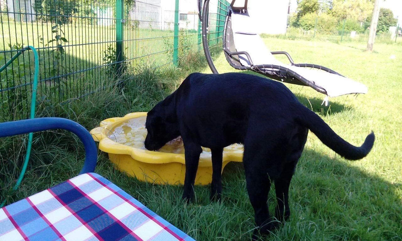 Manche Hunde bevorzugen das kleine Schwimmbecken.