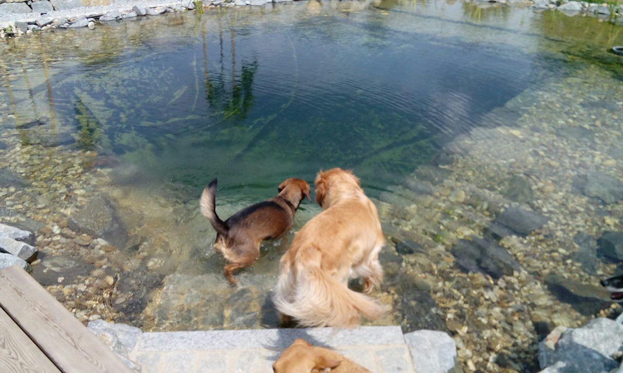 Luna und Luis gehen schwimmen.