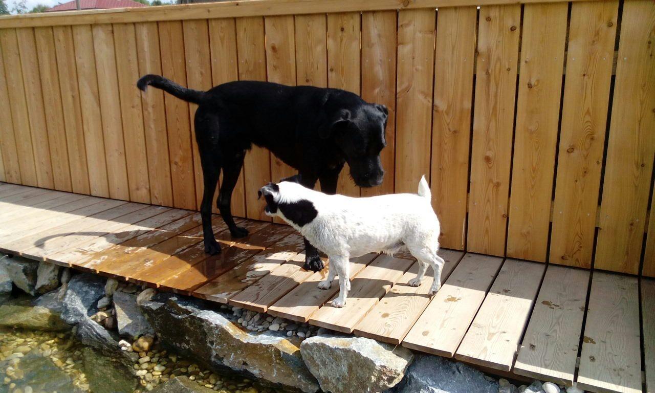Leo und Tex spielen nach dem Baden am Steg.