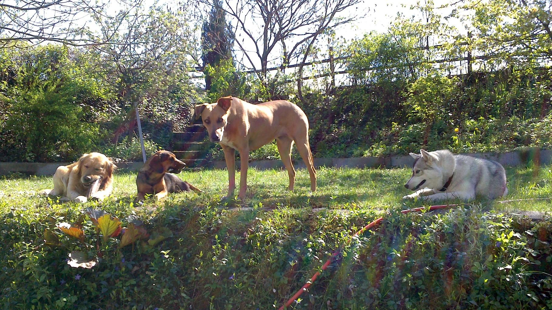 Spielstunde im Garten