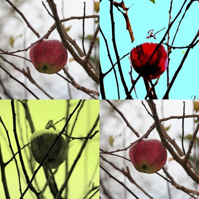 Äpfelquartett Nr. 16