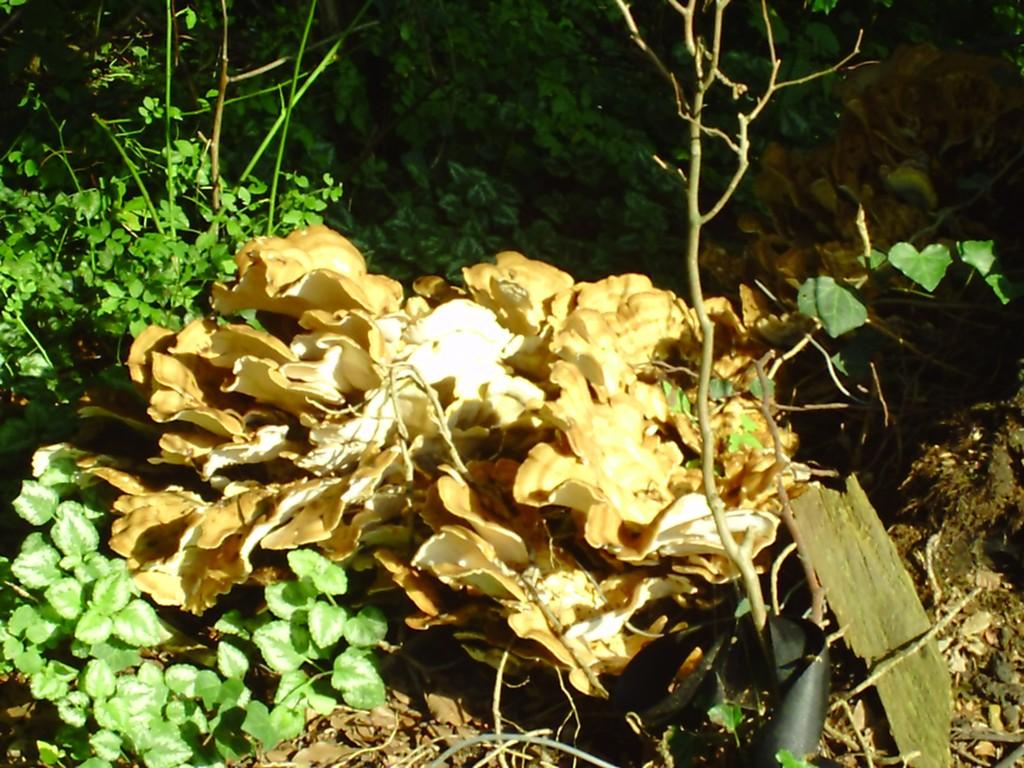 Pilze am Alsterwanderweg