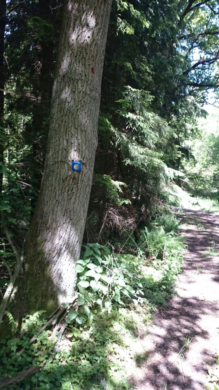 Pilgerzeichen im Wald