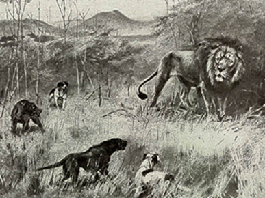"Hunting dogs - two of them show a ridge on the back. F.C. Selous ""Travel and Adventure in Africa"" (1893)"