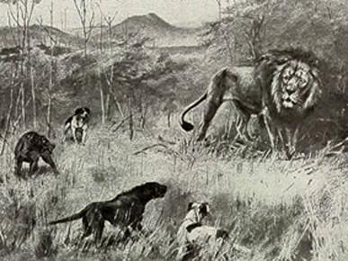 """Medību suņi, diviem ir skaidri izteikts ridžs uz muguras. F.C. Selous """"Travel and Adventure in Africa"""" (1893)"""